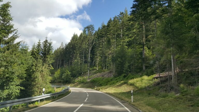into th black forest